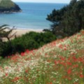 A Beautiful View Of  The Cove From The Gardens at Trewoon - added 29/06/2011 by Vicki & Anthony